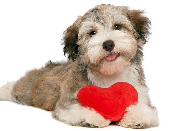 I love you on Valentine's Day #dog #heart