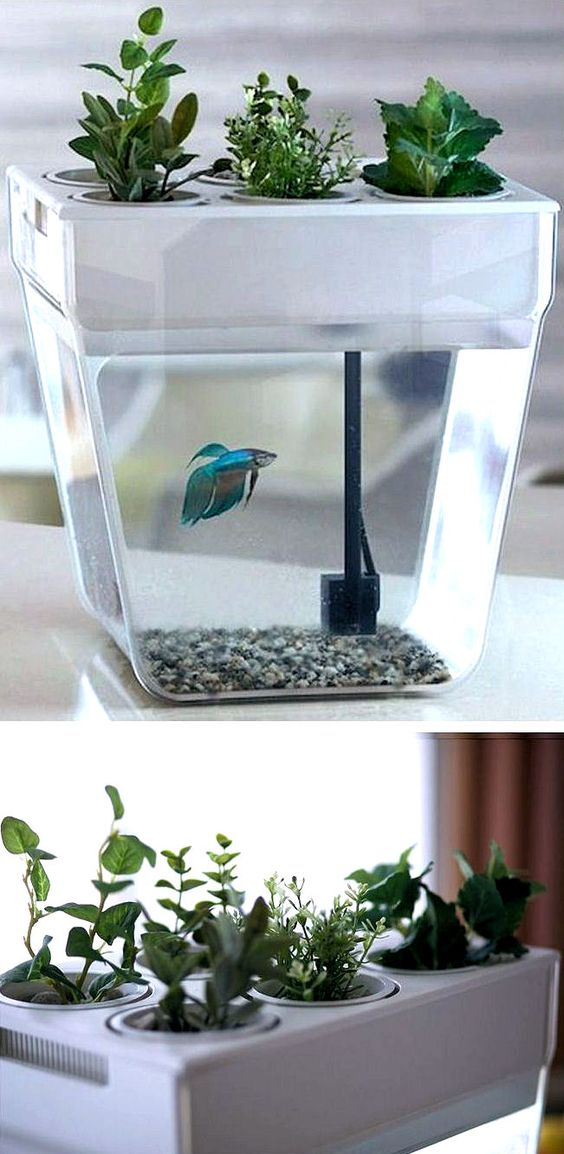 Fish fish tanks and cleaning on pinterest for Self cleaning fish tank