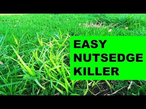 How To Get Rid Of Nutsedge In Your Garden