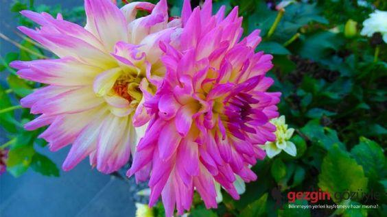 Inspirational Koln Flora Garden