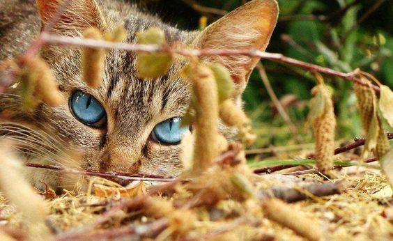 stunning http://sulia.com/channel/cats/f/5529f074-ea8d-4c04-90f2-f722f17274c2/?