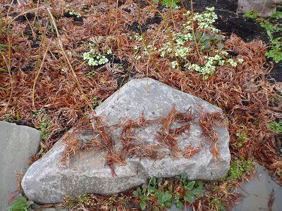 Acer Leaves, Blue Ridge - Seattle, WA