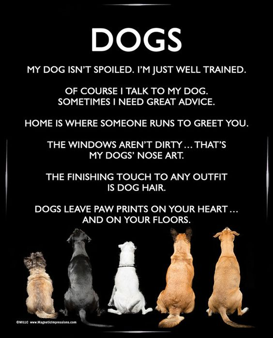 Dogs 8x10 Poster Print. A funny dog poster is the perfect gift for Mother's Day!: