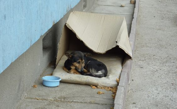 Homeless dog living in a cardboard box gets rescued & has a heartwarming...