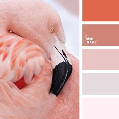 color marrón rosáceo, color rosado del flamenco, colores para la decoración, coral, elección del color, matices de color coral, matices fríos y cálidos, paletas de colores para decoración, paletas para un diseñador, rosado suave, tonos pastel de color coral.