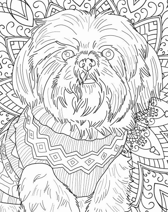 Shih Tzu Coloring Page Unique Best Coloring Books For Dog Lovers