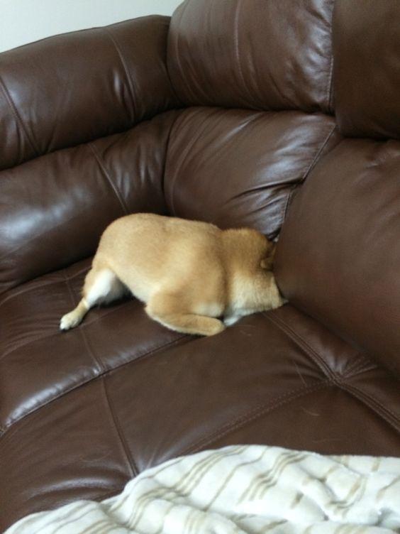 Tentando atravessar o sofá