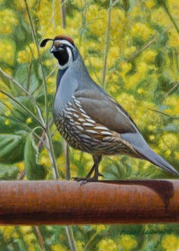 Quail in Mustard 7x5, painting by artist George Lockwood
