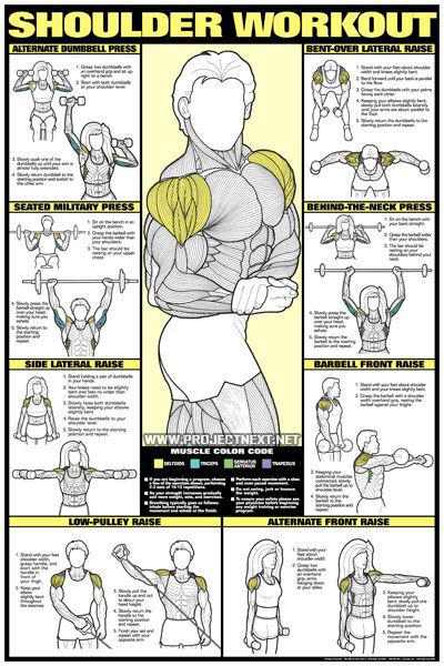 weight exercises training exercises back workouts workout at home