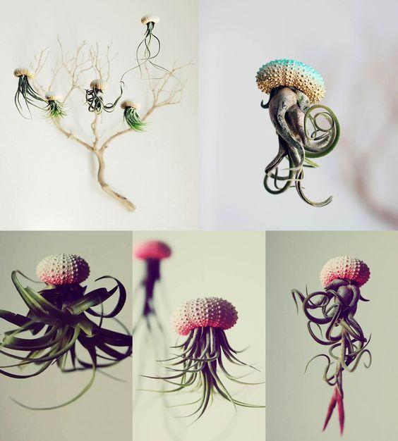 Coquilles d'oursins remplies de plantes tillandsias. On dirait des méduses.