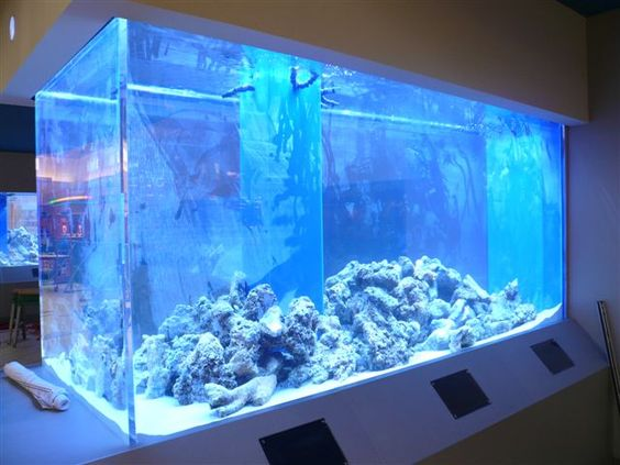large aquarium tanks 1000 aquarium ideas