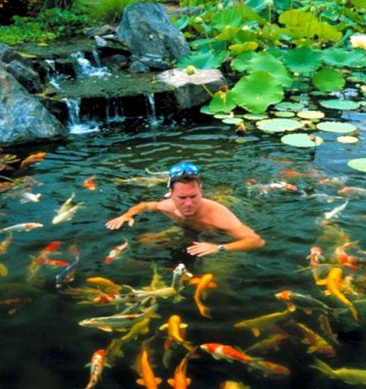 Backyard ponds make fish keeping fun alabama backyard for Koi pond to swimming pool