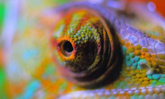 El camaleón ya no es el único que puede cambiar de color, esta piel inteligente también - Contenido seleccionado con la ayuda de http://r4s.to/r4s