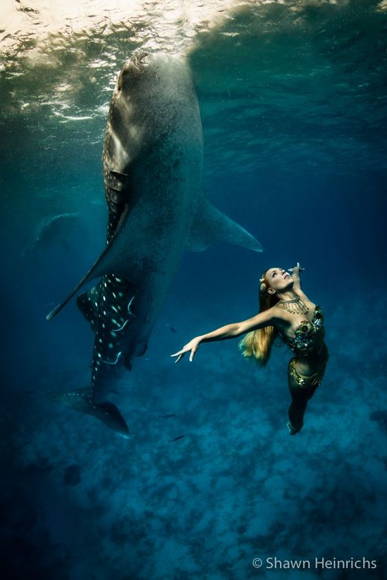 Whale sharks and models strike a pose