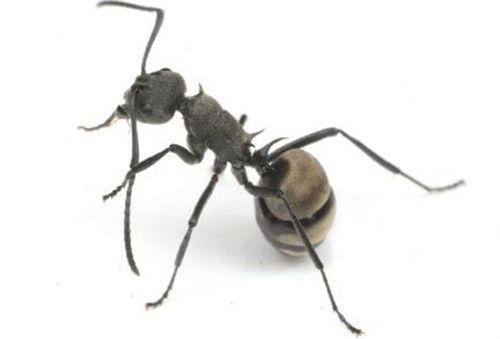 蟻 駆除 退治 画像あり 蟻 駆除 蟻 キリギリス