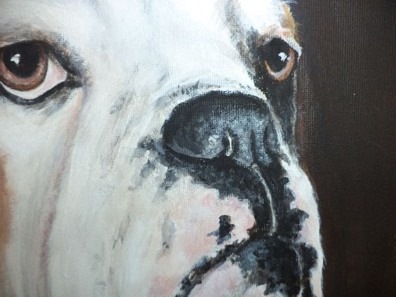 close up bulldog in acryl geschilderd door leny tournois