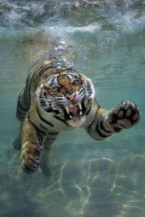 Is this a tiger shark? He may think he is, but we know different. | For more cute/funny pets videos visit → http://gwyl.io/
