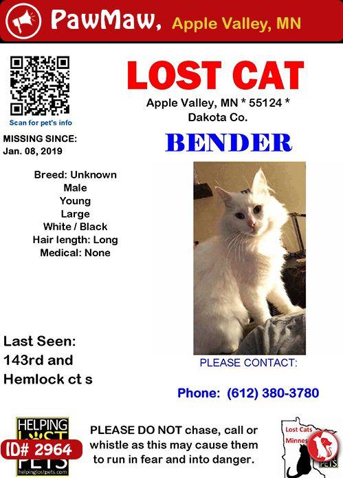 Help Bender Is Lost Losing A Pet Cat Colors Pets
