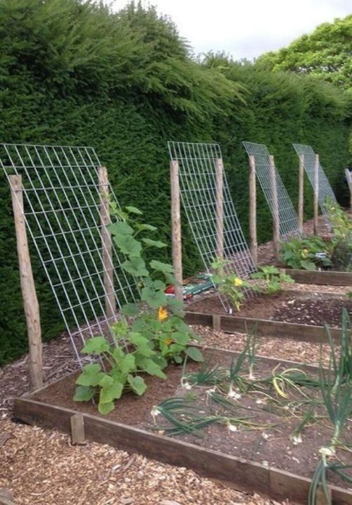 Hochbeete Exterieur Garten Inspiration Hochbeet Garten Amp Exterie Backyard Vegetable Gardens Vegetable Garden Design Small Vegetable Gardens