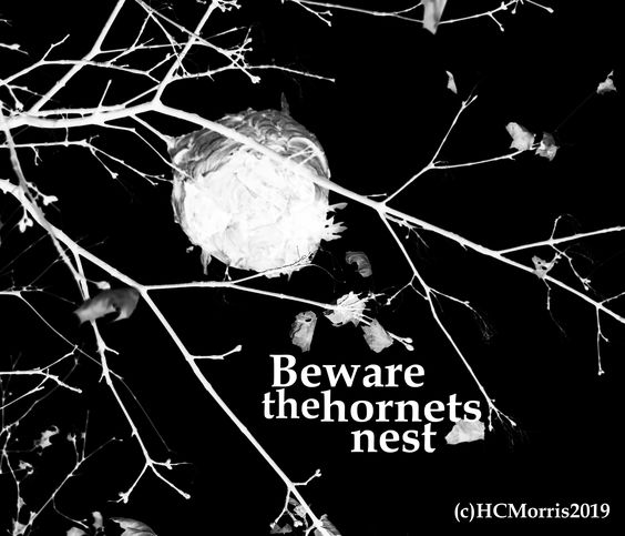 abstract image of hornets nest with beware words