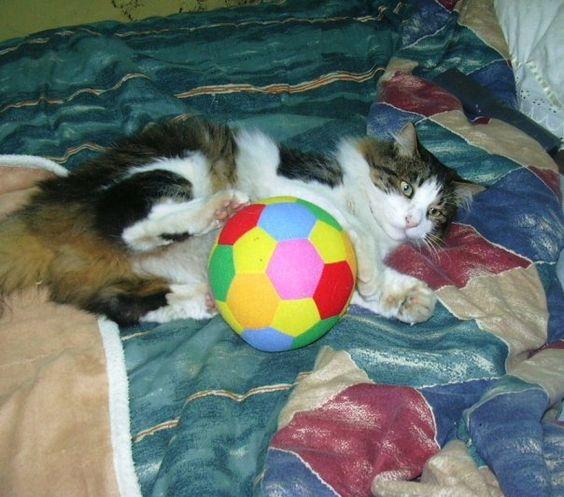 este es mi gato!! bello!!