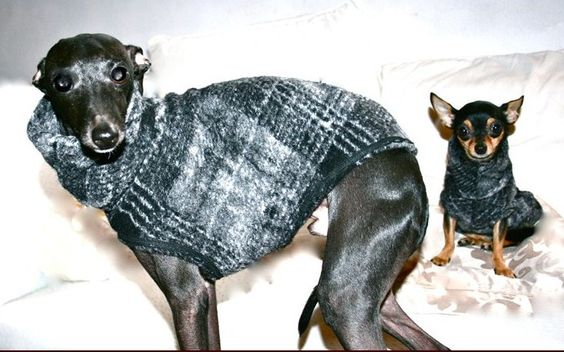 Buy #Greyhound_coats at comparative price at - http://barcelonadogs.com/