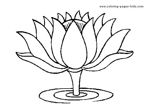 Pictures Of Lotus Flower Drawings For Kids Rock Cafe
