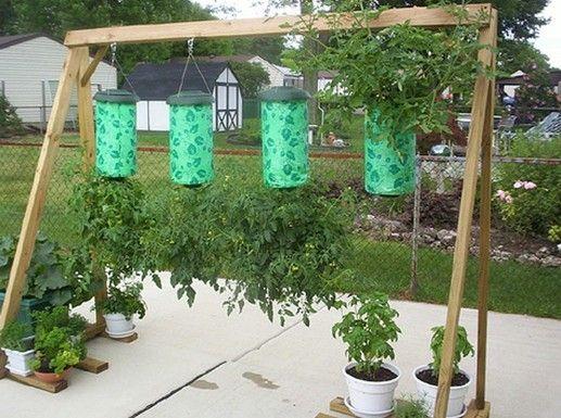 Tomaten kweken op z'n kop