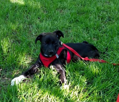 Adoptable Dogs Mn Animal Rescue Wags Whiskers Animal Rescue In 2020 Dog Adoption Dogs Animals