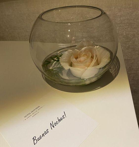 una rosa en una pecera con una tarjeta de buenas noches