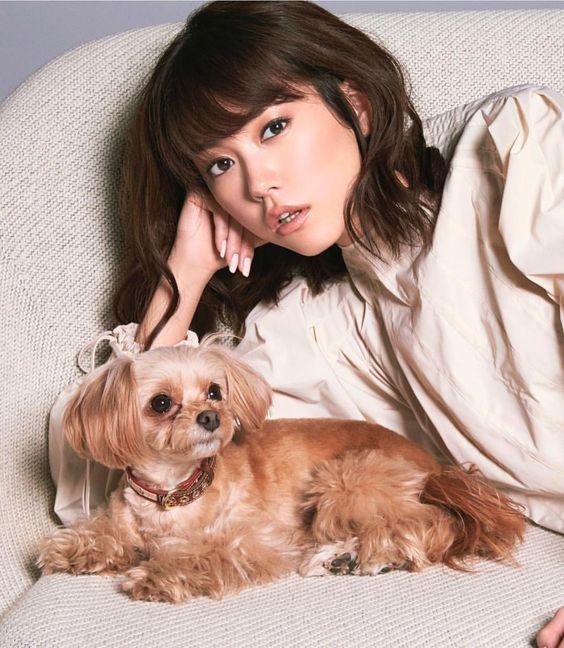 茶色い犬と桐谷美玲