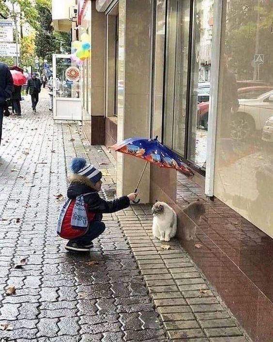 Gentil minet je vais t'abriter avec mon parapluie...