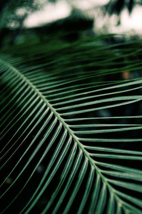 Tropicalia_inspiration (ss14: ilhas selvagens) www.beyouminibikinis.com