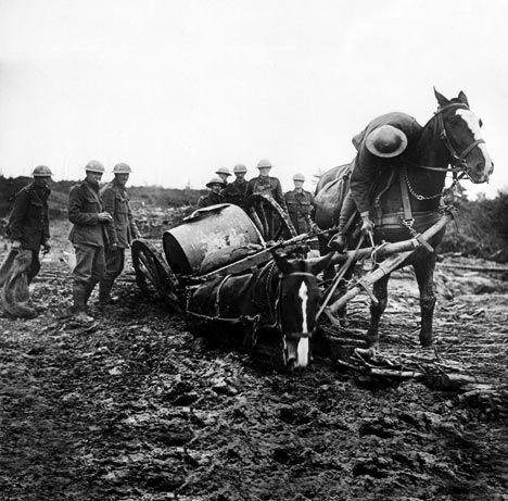Few pictures show the suffering horses went through in the war. We know that World War I killed some ten million fighting men, almost 800,000 of them British.  Much less known is the fate of a million hapless horses, sent to France between 1914 and 1918. Only 62,000 returned.