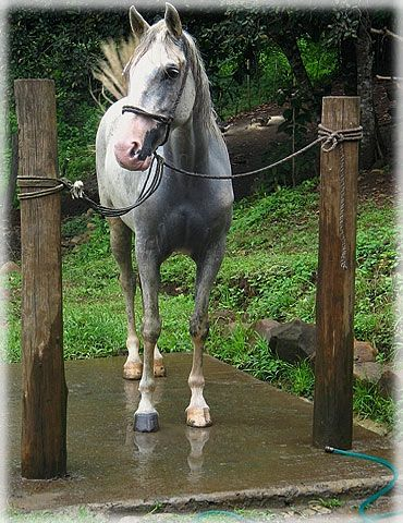 Horses Outdoor And Mud On Pinterest