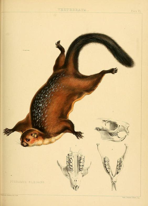 The Zoology of the voyage of H.M.S. Samarang, under the command of Captain Sir Edward Belcher, C.B., F.R.A.S., F.G.S., during the years 1843-1846 / - Biodiversity Heritage Library