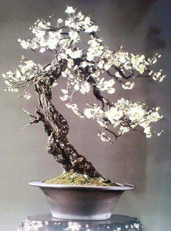 Bäume, Bonsai and Form on Pinterest