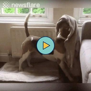 cachorro esperto se cobre certinho…..