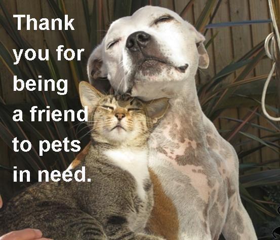 349,192 Adoptable Pets On Petfinder Today, Fri., 9/26/14:
