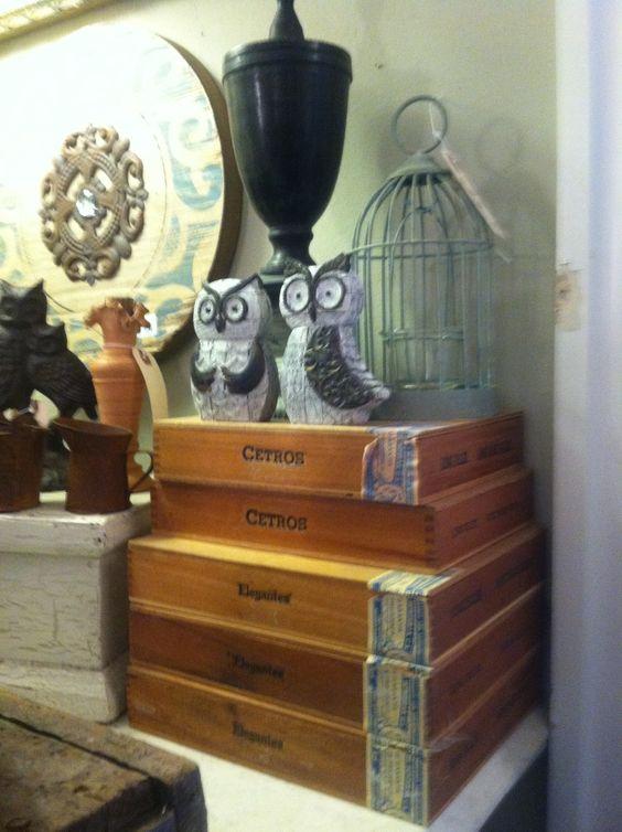 Cute Lil owls