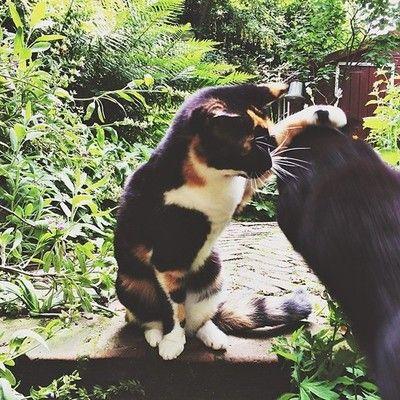151/365 'Pets, pets, pets' ('tap, tap, tap' in English). Happy Caturday! /via Instagram http://ift.tt/1iFQAAF