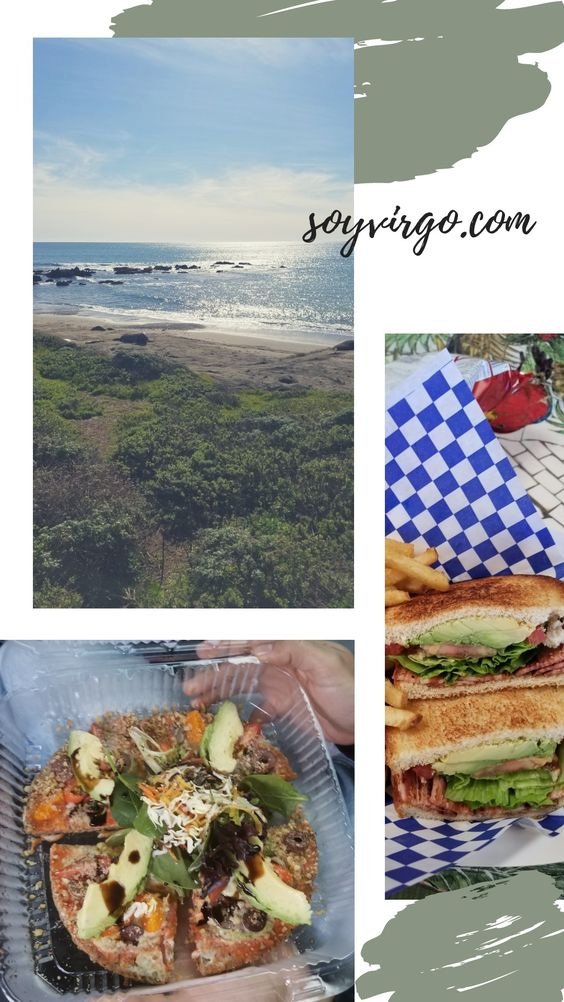 memories from february 2019, elephant seals, vegan food raw burger blta bacon sandwich