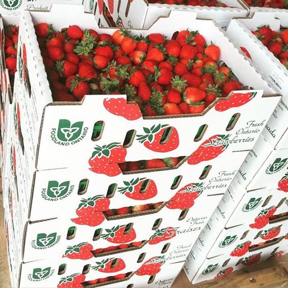 Guess what's back in your bins this week?  Fresh Local & Delicious Strawberries. #teamleeandmarias #supportlocal #supportlocalfarmers