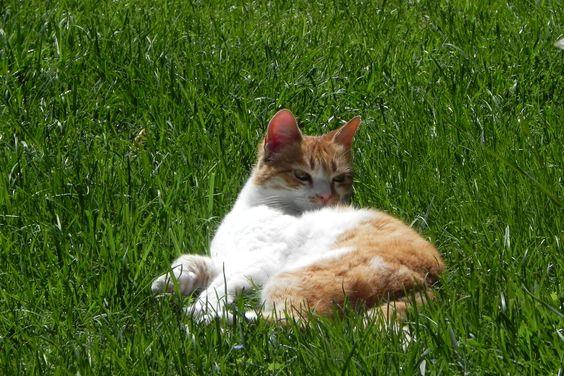 "My lovely cat ""Rossella"" here in Le Torri."