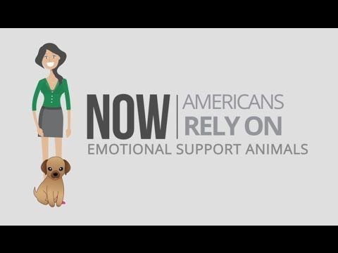 Get Your Emotional Support Animal Letter In Less Than 48 Hours