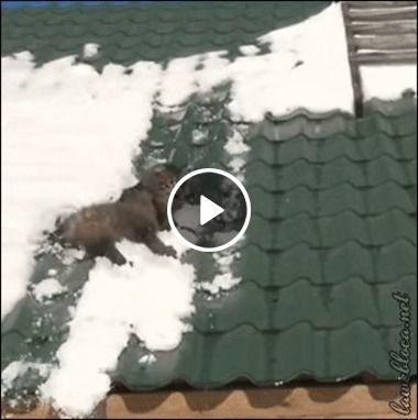 Gato escorrega pelo telhado em neves.