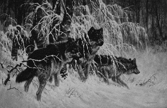 """arcusxx: """"winter forest """""""