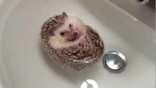Floating Hedgehog I want one of these!!