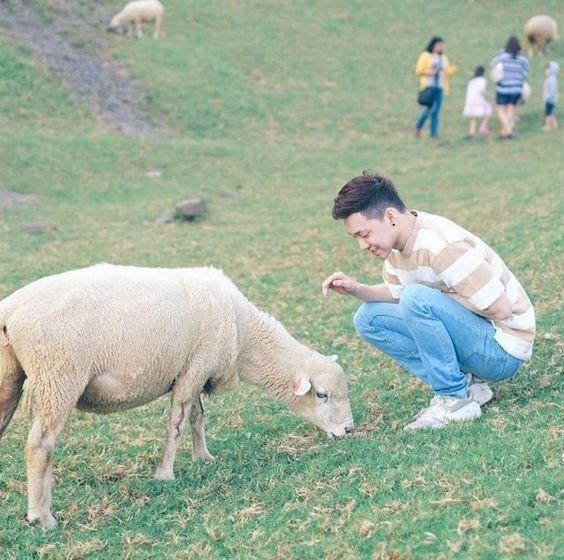 Những chú cừu thân thiện