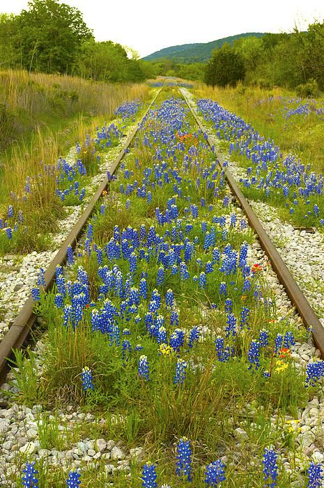 """This abandon track runs alongside Highway 1431 on the North side of Kingsland, Texas. The shot was made in April 2010"" - Fast Track by Robert Anschutz with Pin-It-Button on FineArtAmerica"